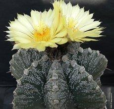 виды фото кактусы