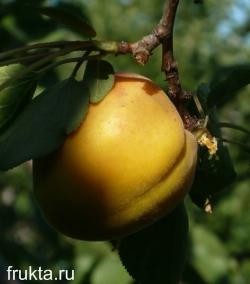 Мякоть абрикоса