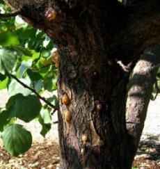 клей на дереве