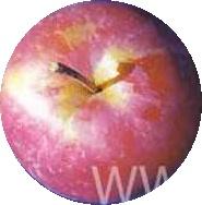 яблоко авангард