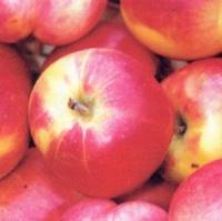 яблоки августа