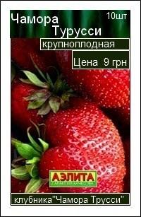 сорт клубники Чамора Турусси