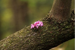 древесина дерева