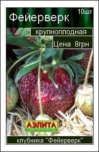 сорт клубники Фейерверк