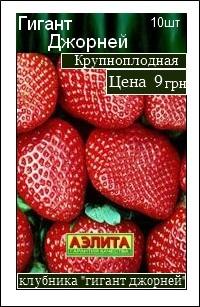 сорт клубники Гигант Джорней