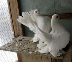 Птичий помёт