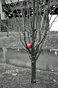 Яблоня не плодоносит