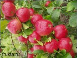 Прекрасные яблоки