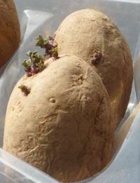 вялый и сморщенный картофель