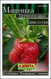 сорт клубники Машенька