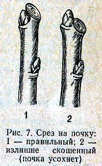 обрезка веток деревьев