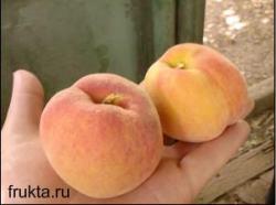 Сорт персика - Соковитий