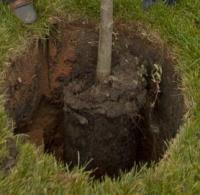 удобряем яму