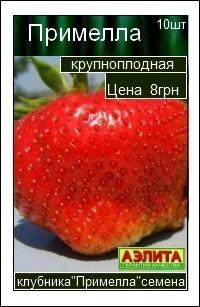 сорт клубники Примелла