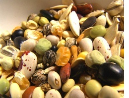 Вирощування насіння овочів