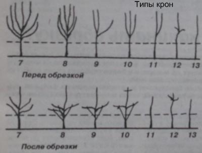 типы форм кроны