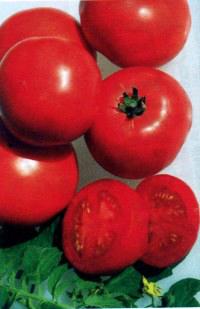 томат сорта Арена
