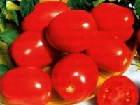 томат сорта Амулет