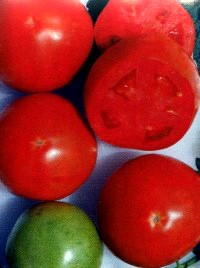 сорт томат Спартак