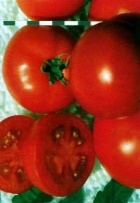 сорт томатов Карнавал