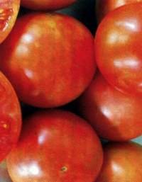 сорт томатов Сэвэн