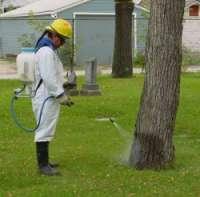 подкормка для дерева