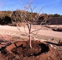 удобрение деревьев
