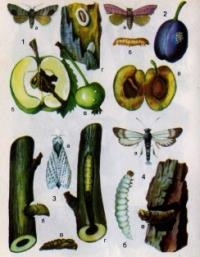 вредители и болезни сада