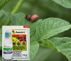 Амплиго препарат от колорадского жука.