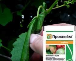 проклейм гроздевая листовёртка