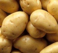 Картофель уход и выращивание