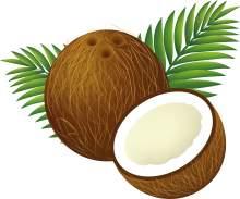 кокос - что это