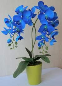 голубая орхидея побелела