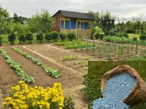 подкормка растений удобрениями