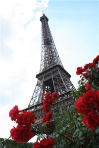 французские розы купить