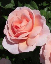 Rose Francis Blaise.