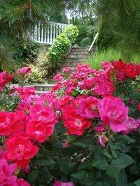 Rosen Landschaft