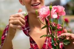 Догляд за трояндами