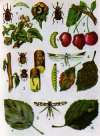 Krankheiten und Schädlinge von Bäumen